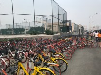 Bikes are all over Beijing