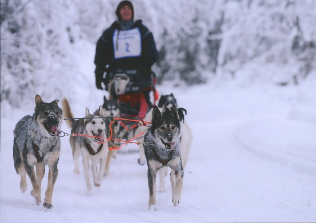 Robert Forto Mushing