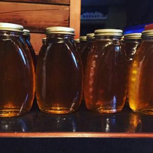 poohs honey