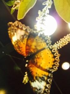 butterfly pavilion Robert Forto