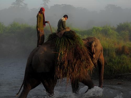 elephant grass crossing rive 2