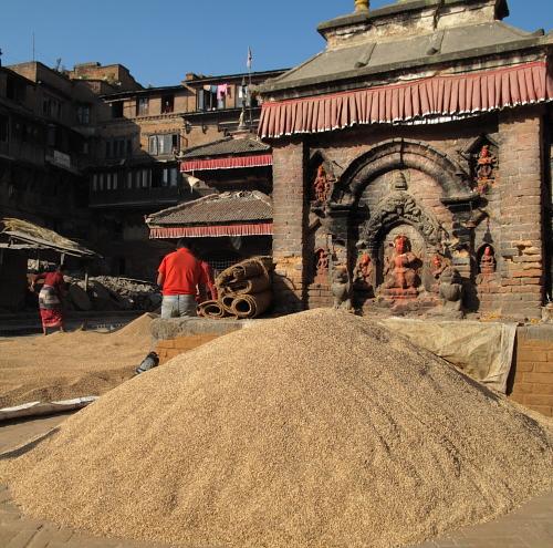 rice in square 2