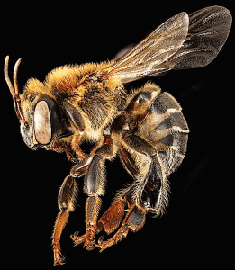 Wildfires, wildflowers, bees. USGS. Public Domain