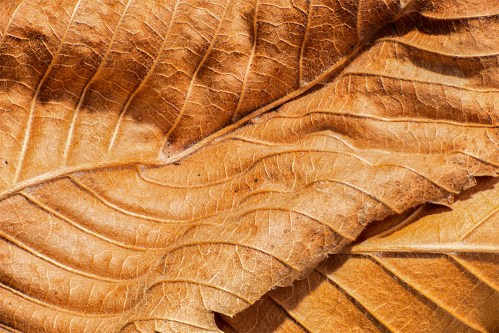 leaves-dried-brown-00