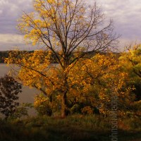 Cootes Paradise Hamilton Ontario