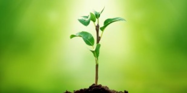 sprouting_tree_960_480-960x480