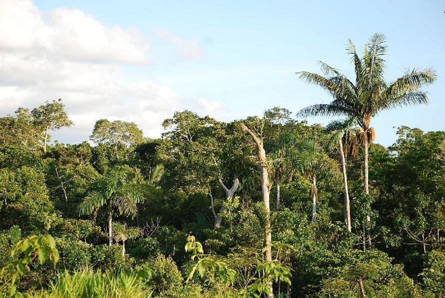South_American_Jungle_SG