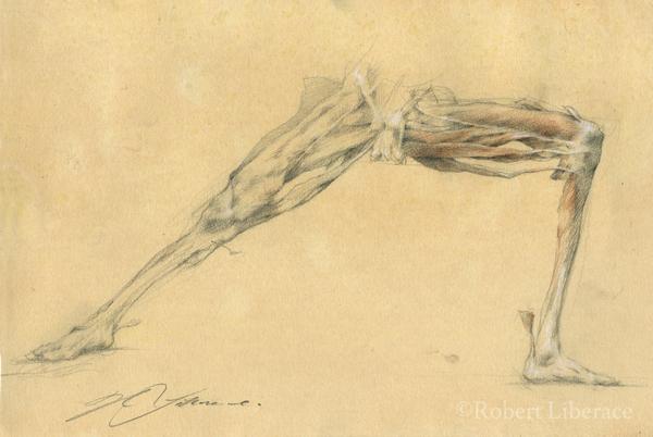 Robert Liberace, ecorche legs, three-color-chalk