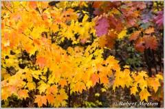 leaves-ii