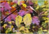 leaves-viii