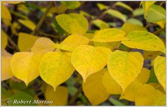 leaves-xiii