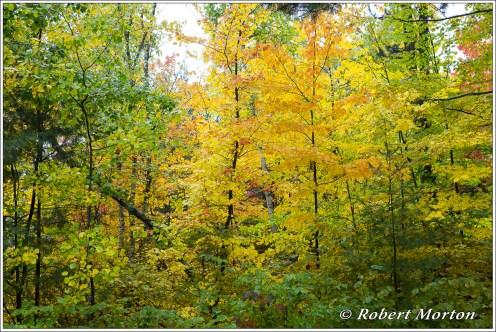 leaves-xvii