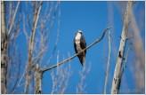 Osprey Male Lookout 2