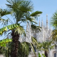 ARE WE ON A CARIBBEAN ISLAND? NO, IT'S PIAZZA DEL DUOMO IN MILAN WITH PALM AND BANANAS TREES...