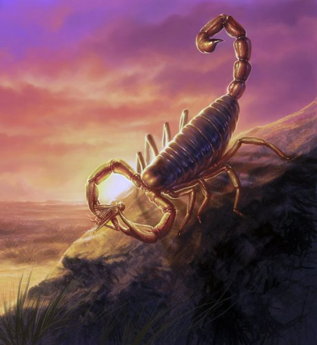 Editorial Illustration - Scorpion