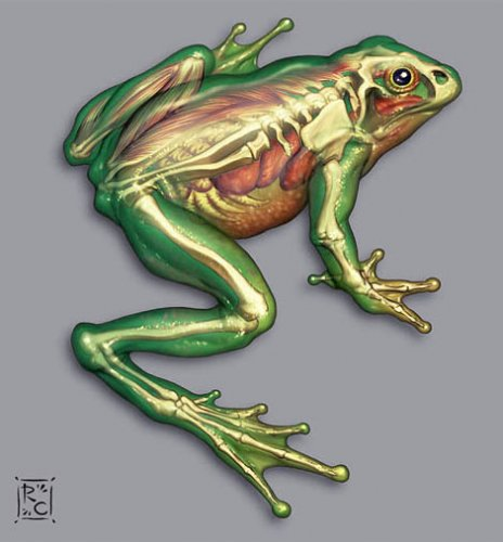 gd_beckermayer_frog