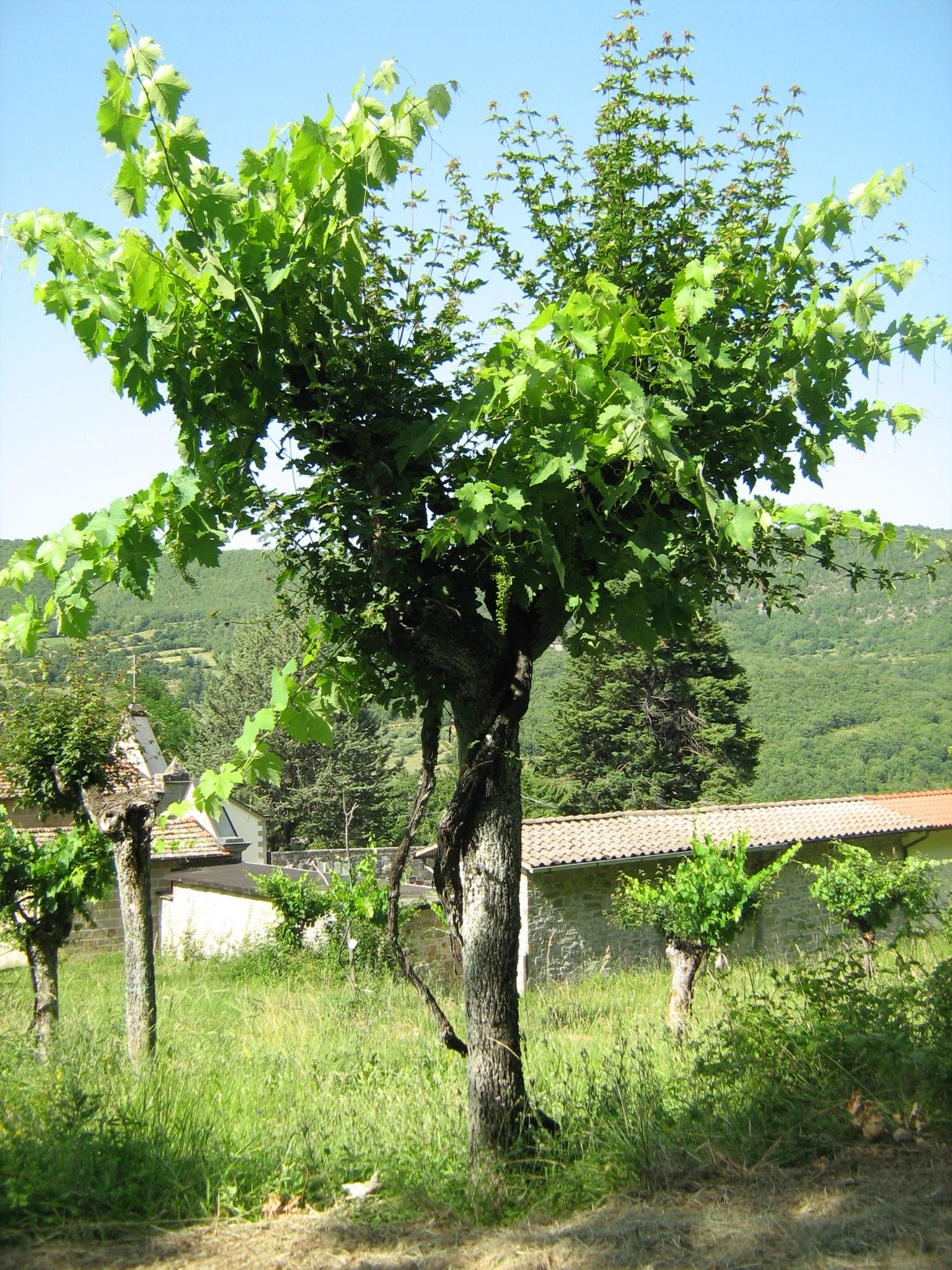 roberto mercurio  alberi  foreste  trees  forests