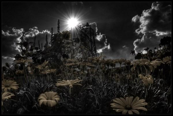 Dark Park Robert Santafede