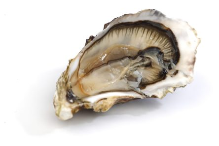 Oyster on white