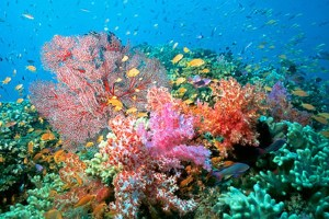 coral-reef-pohnpei