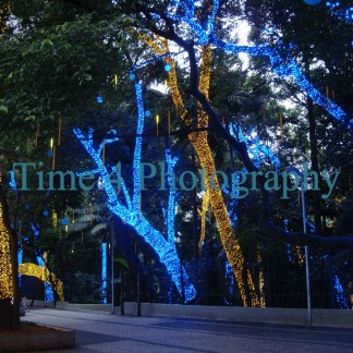 The famous Paulista Av. in Sao Paulo during Christmas time at dusk, showing some trees nicely decorated with yellow and blue lights.