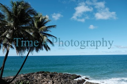 Palm trees in Bahia,Brasil,pointing towars a nice sky with some white clouds and showing deep blue waters of the brazilian seas.