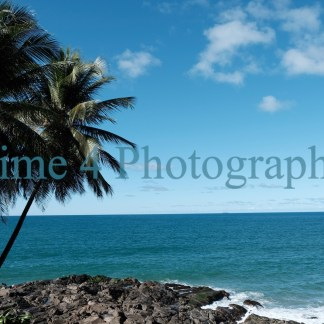A group of Palm trees in Bahia,Brasil, with a rock under it and the blue tropical sea