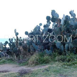 A big group of blue cactus on the sand of a rocky beach in Salvador da Bahia, Brasil