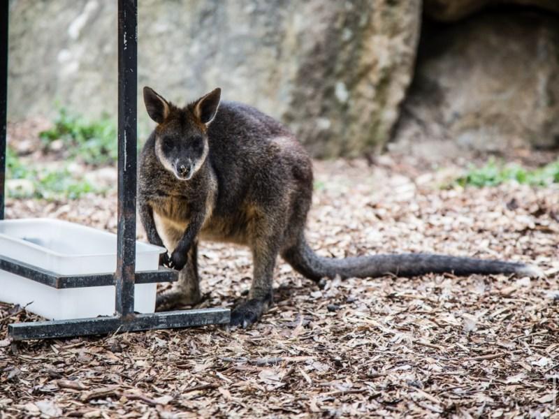 Australia [Melbourne + Healesville]