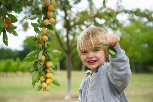 Boy-picking-fruit-off-tree-000045620728_Double
