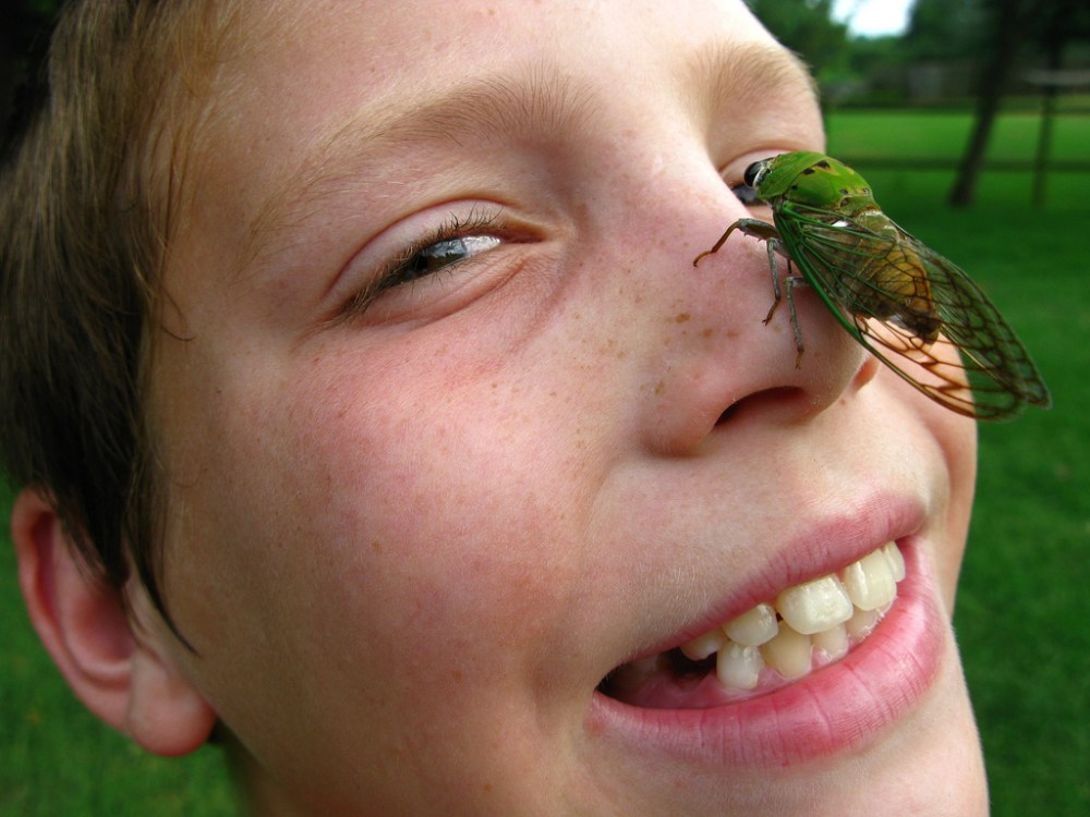 cicada-on-boys-face