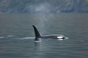 Orca 09-13-09