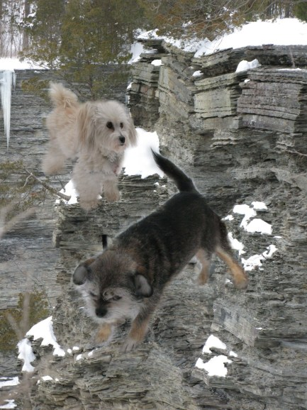 FLYINGDOGS