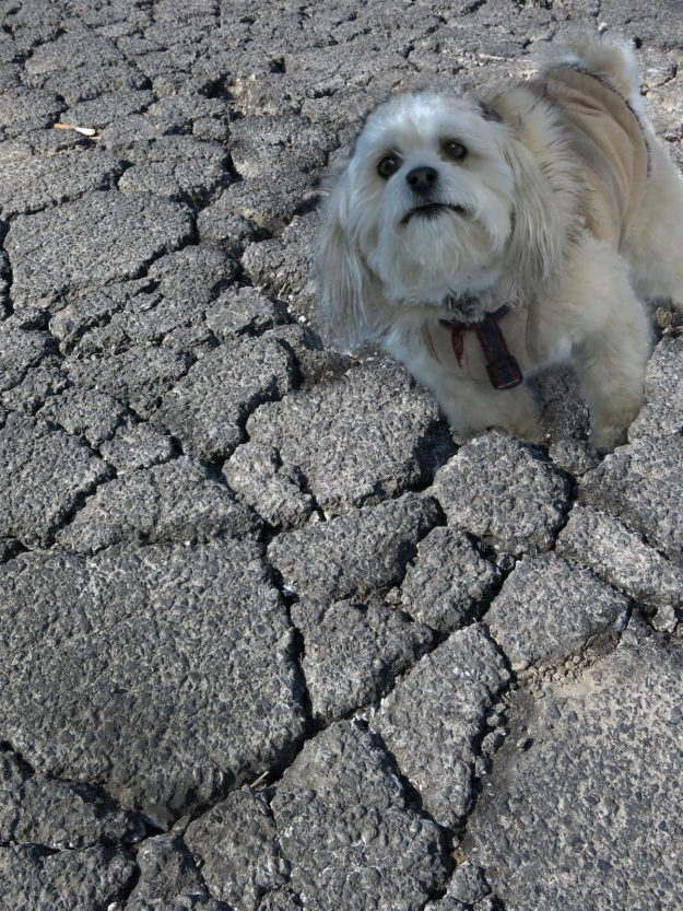 Robin Botie of Ithaca, New York, Photoshops her inherited dog Suki sinking in cracked concrete.