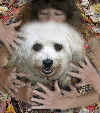 Robin Botie of Ithaca, New York, photoshops loving hands all around Suki, her inherited Havanese dog.