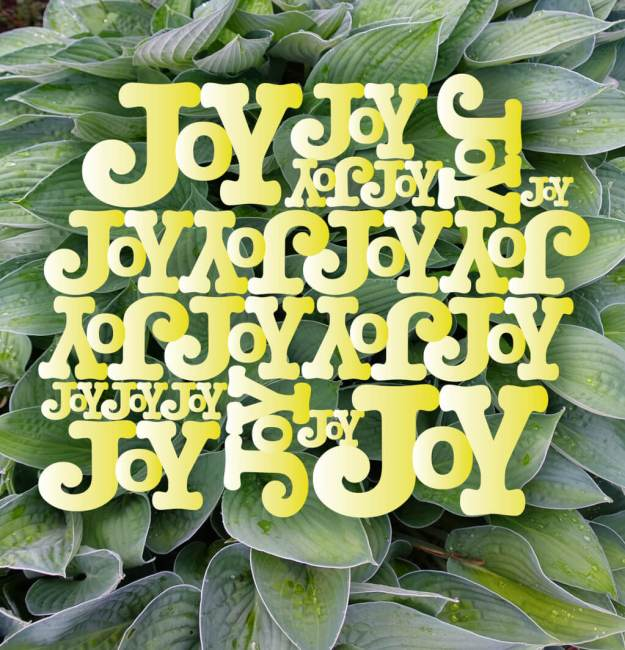 Robin Botie of Ithaca, New York photoshops hostas from her garden as a background for the words of joy she created in Adobe Illustrator.