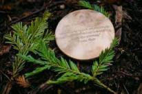 Memorial company buys a CT forest as an alternative to cemeteries