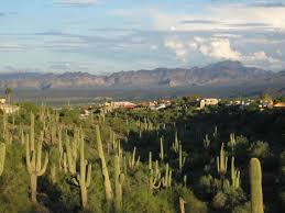saguaro and mts