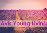 avis young living