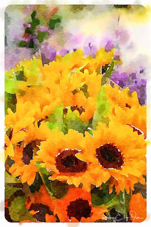 Bouquet of Sunflowers © Robin E. H. Ove All Rights Reserved