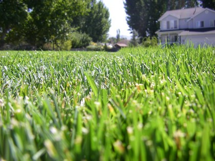Using a mower blade that's sharpened and balanced is crucial to a healthy lawn
