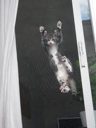 Sliding door screens damaged by animals can be repaired with pet screen