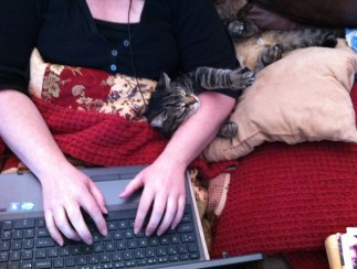 writing novella w cat