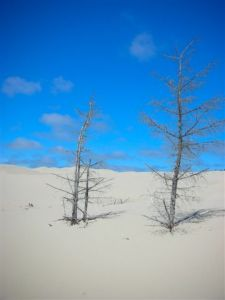 Oregon_Dune_Solitude_byRobinWoods