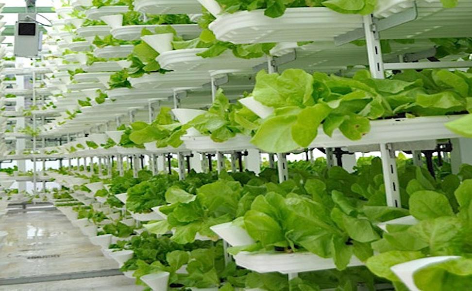 Vertical farms profiled on CBS Morning News  Robohub