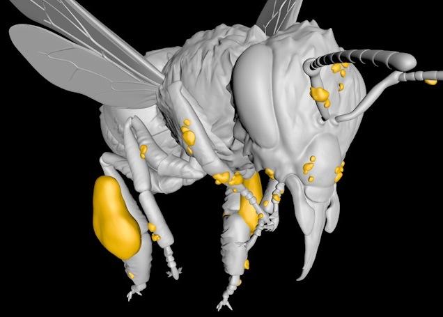 Digitale afbeelding van een educatief 3D-model van een honing-bij. Close-up.