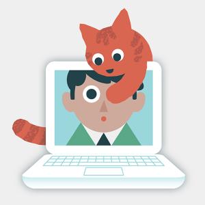 Annoying cat video call