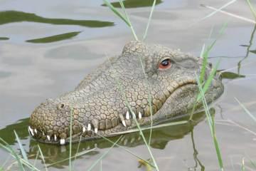 Krokodil in het water