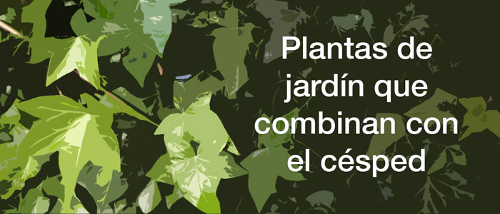 plantas-de-jardin-cesped