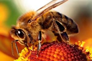 sheffield uni Bee vision